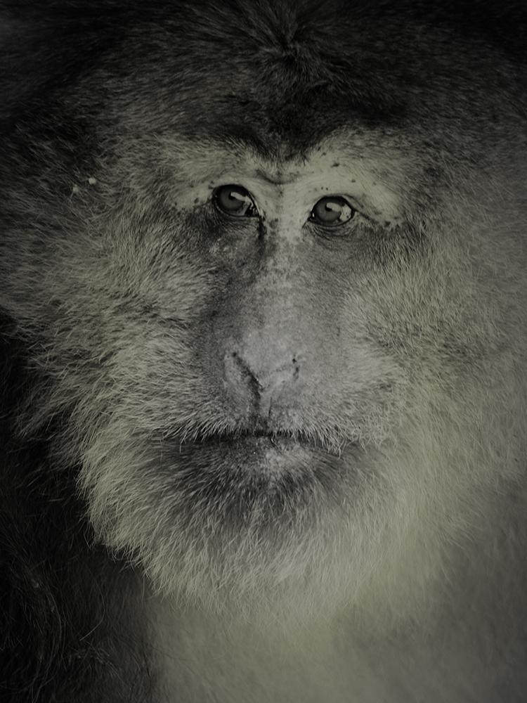 动物肖像 - 安徽轻工国际贸易股份有限公司